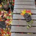 Fall colors on Lake Superior's North Shore: Silver Bay and Beaver Bay area