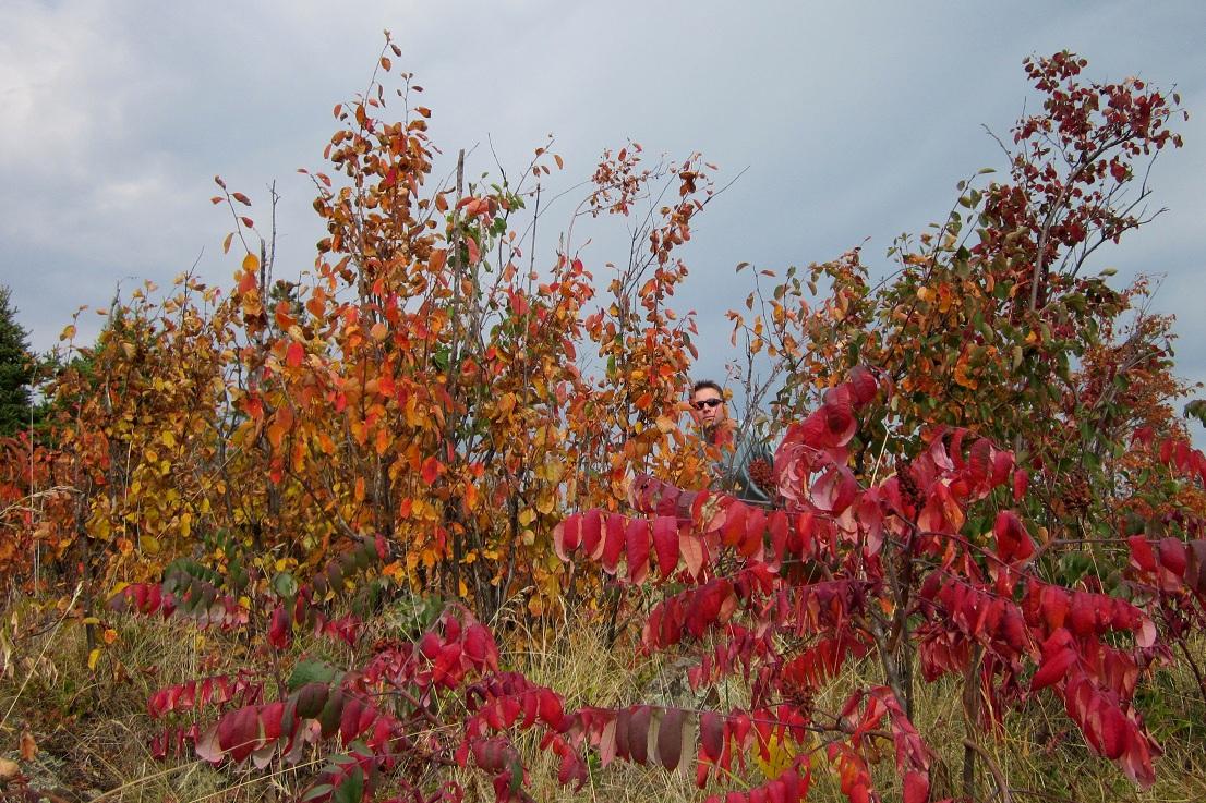 Minnesota-Fall-Colors-33