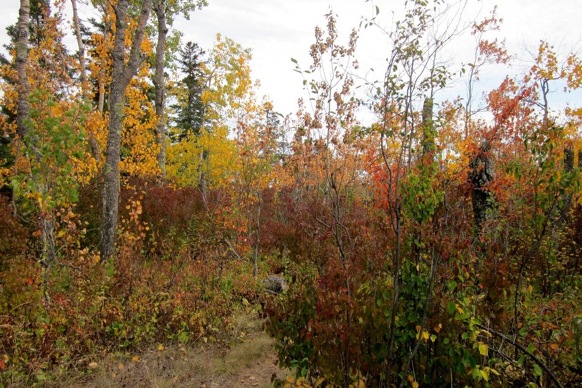 Minnesota-Fall-Colors-55