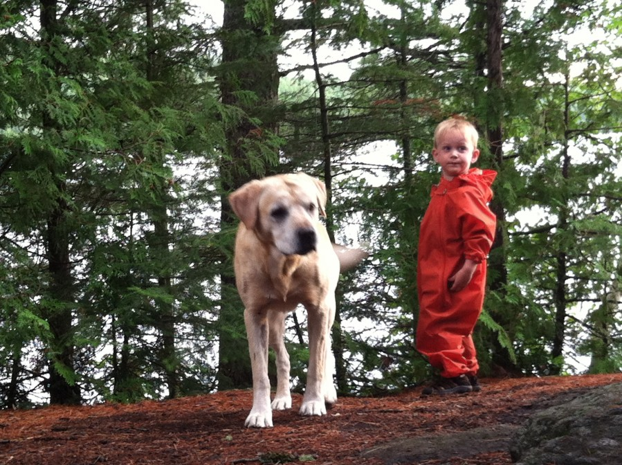 Missing: Male Yellow Lab - Perfect Duluth Day