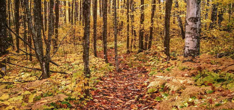 trails_lead