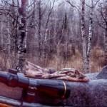 Minnesota Deer Hunting Opener 2015