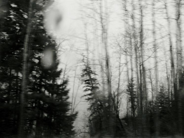 Tim White, untitled (trees in rain), Archival inkjet print,  2014