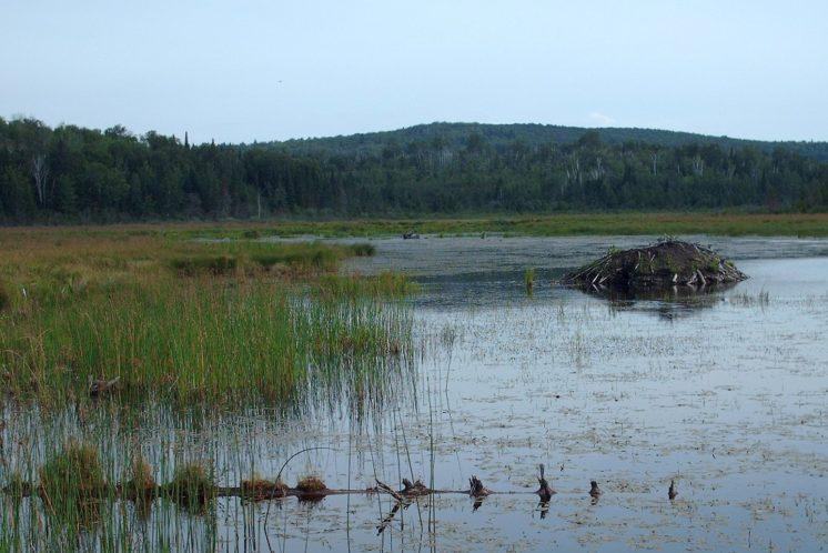 080817-sawmill-pond