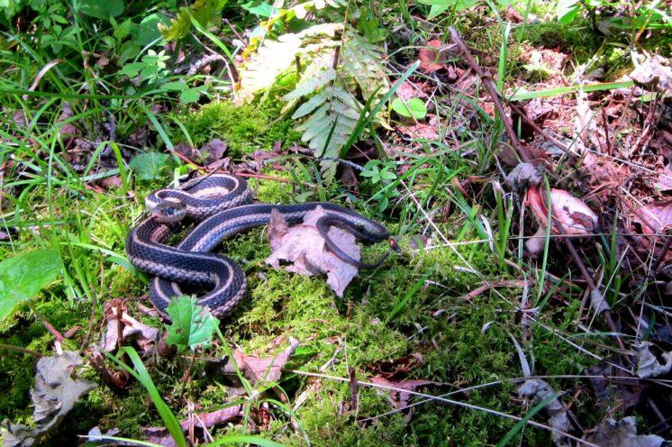 20130803-snake
