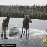 Hungry Jack Lake Moose Rescue