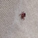 First Tick of the Year — 2017 Edition