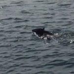 Video: Bear swimming near Madeline Island