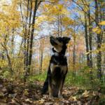 Selective Focus: Last glimpse of Fall