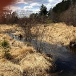 Where in Duluth?: First Trailwalk of the Season