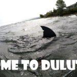 Dank Lake Superior Bull Shark Memes