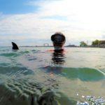 Sharkgate: The Lake Superior Bull Shark Conspiracy
